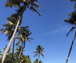 blue sky, palmtree, and guadeloupe image
