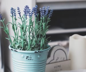 flowers, grunge, and home decor image