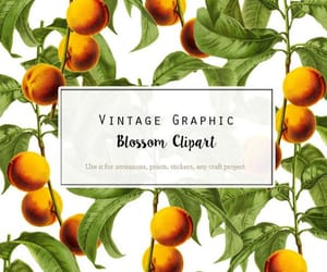 apricot, etsy, and fruit prints image
