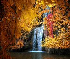 nature, trees, and waterfall image