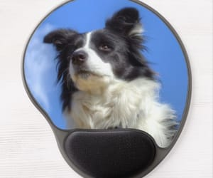 blue, border collie, and dogs image