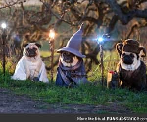 awesome, lord, and pugs image