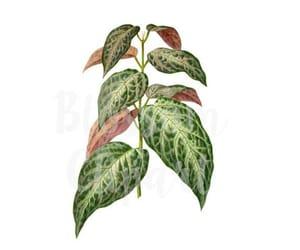 etsy, foliage, and botanical prints image