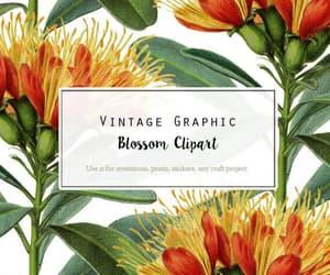 botany, orange flower, and wild flower image