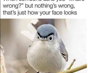 funny, jokes, and birds image