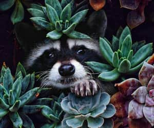 animal, animals, and racoon image