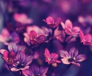 Image by pinkfluffyunicorn3657