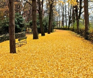 autumn, park, and yellow image