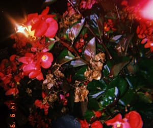 flash, Fleurs, and flowers image