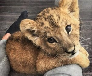 adorable, baby lion, and cute image