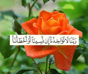 islamic, muslim, and rose image
