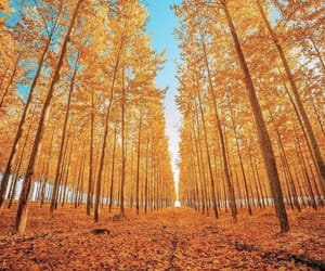 autumn, trees, and blue sky image