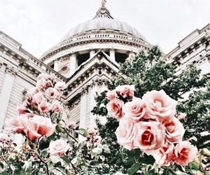 rose, flowers, and travel image
