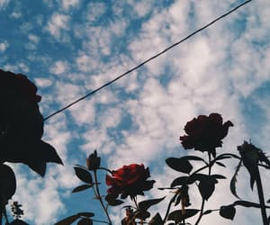 flowers, poetry, and roses image