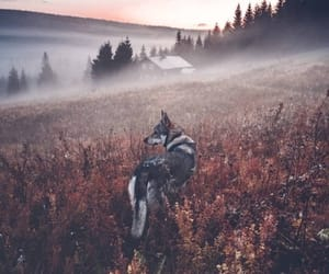 autumn, sunset, and wolf image