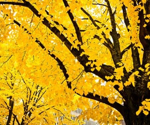 yellow, tree, and nature image