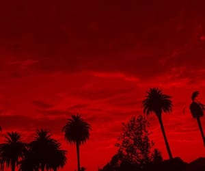 aesthetic, cali, and palm trees image