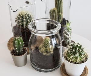 cactus, plants, and diy image