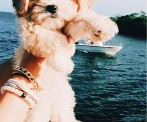 adorable, boating, and dog image