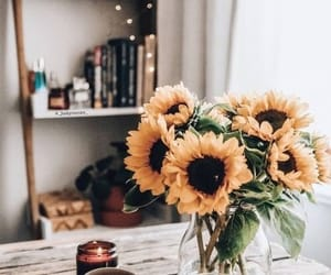 flowers, sunflower, and home image