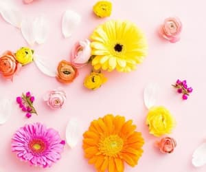colors, pink, and backgrounds image