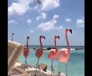 animals, flamingo, and sommer image