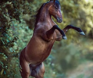 animal, nature, and horse image