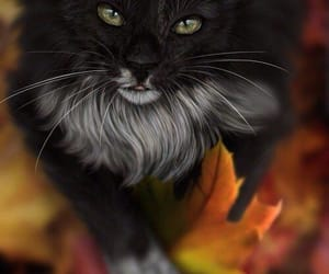 cat, fall, and animal image