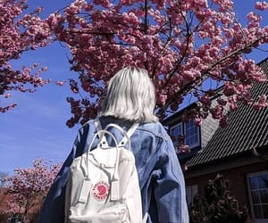 avatar, cherry blossom, and japan image