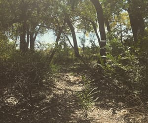 trail, bosque, and woods image