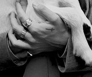 animal, black and white, and hands image