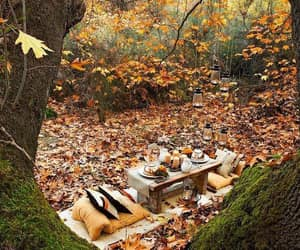 pumpkins, fall, and seasons image