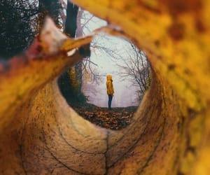 autumn, fashion, and leaf image