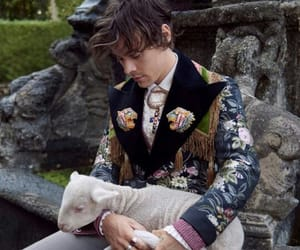 animal, gucci, and harry image