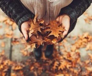 autumn, cozy, and crisp image