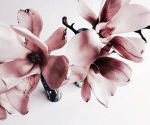 beautiful, pretty, and tumblr image