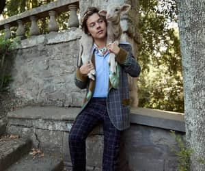 animal, garden, and Harry Styles image