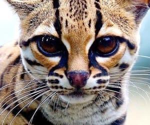 Animales, belleza, and felino image