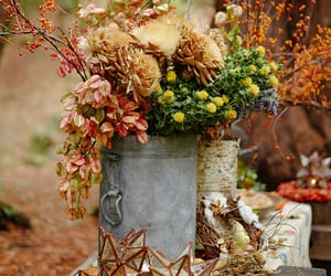 autumn, fall, and scenery image