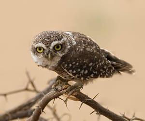 Owl by Muhammad Farooq