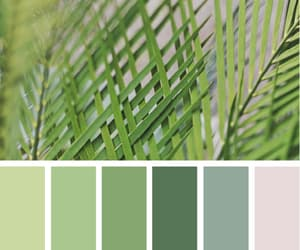 aesthetics, seeds color, and seedscolor image