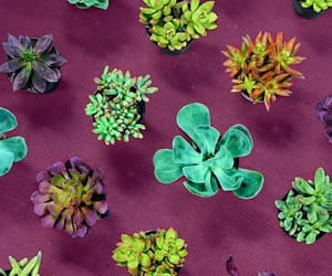 cactus, naturaleza, and verde image