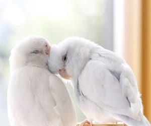 birds, pets, and couple image