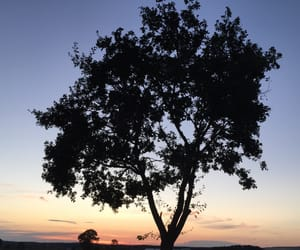 country side, nature, and tree image