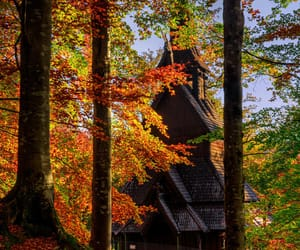 autumn colors, woods, and landscape photography image