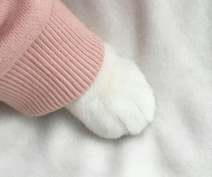 aesthetic, cats, and paws image