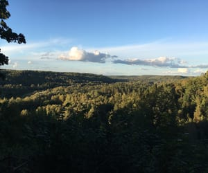forest, hometown, and national image