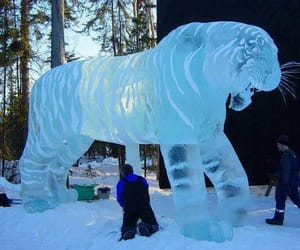 cold, tiger, and creation image