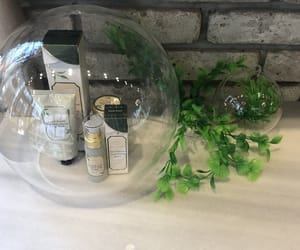 aesthetic, glass, and greenery image