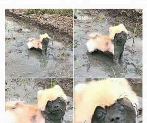 divertido, gracioso, and perros image
